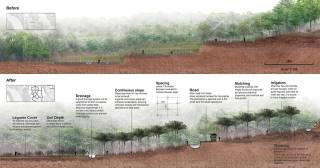 Before and after section views of strategic planning for Myeik oil palm plantation. By AU YOUNG Chung Yan Sam, 2015.