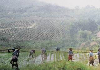 Juxtaposition of smallholder agriculture and large-scale agro-industrial plantations. By AU YOUNG Chung Yan Sam, 2015.