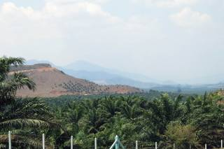 Oil palm plantations on unsuitable slopes in southern Myanmar. By Ashley Scott Kelly, 2016.